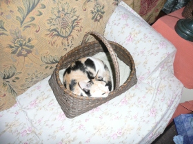 Kneelers & cats 014